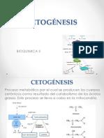 Cetogénesis