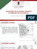 ANATOMIA DE LA MAMA.pdf
