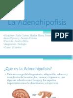 La Adenohipofisis