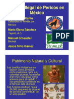 Trafico Ilegal de Pericos en México