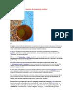 Aparición de la Ingeniería Genética.docx