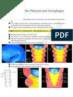 Anatomy of the Pharynx Oesophagus