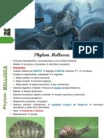 04 Phylum Mollusca.pdf