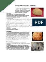 ROCAS FORMADAS EN AMBIENTES NERITICOS.docx