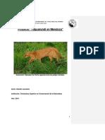 Proyecto yaguarundi.docx