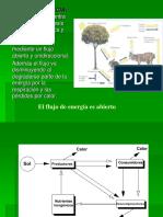 2. Flujo de energía.ppt