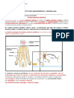 sistema nervioso segunda parte