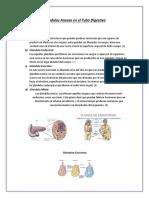 Glándulas Anexas en El Tubo Digestivo
