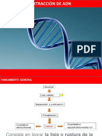 EXTRACCION_DE_ADN.pptx