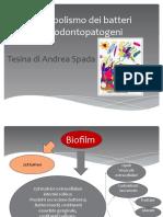 Metabolismo parodontopatogeni