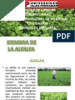 ALFALFA.pptx