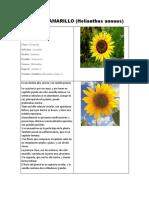 diario de campo girasol amarillo.pdf