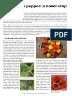 Capsicum Pubescens-The Rocoto Pepper
