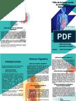 tripctico-del-sistema-digestivo.docx