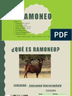 Exposicion Ramoneo Final