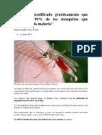 El Hongo Modificado Genéticamente Que Mata Al 99% de Los Mosquitos Que Transmiten La Malaria