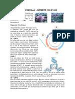 7. Ciclo Celular - Muerte Celular.docx