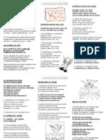 Microsoft Word - Folleto Misa Pentecostés - Espíritu Santo.doc