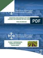 exposicion de cultivos.pptx