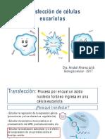 Transfección