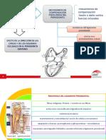 Fuerzas y Salud Periodontal