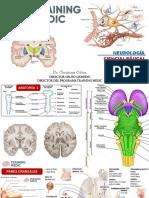 6.Fisiología Sistema Nervioso