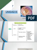 UNIDAD 3 Dra Maldonado