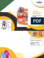 circulatorio matth