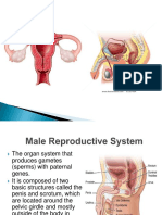 01 Human Reproductive System