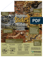 Venomous Snakes of Alabama