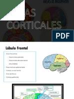 Cerebro II - Lóbulo Frontal