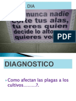 PP  PLAGAS Y ENFERMEDADES-07-2016-BJV.pdf