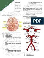 Vascularização Do Sistema Nervoso Central