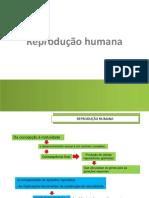 1_reprodução humana- estruturas_reprodutoras_células_sexuais - alunos
