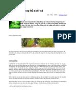 Cây trồng trong bể nuôi cá