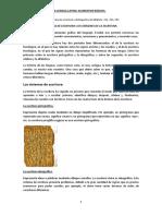 Bloque 2. Sistema de La Lengua Latina. Elementos Básicos.