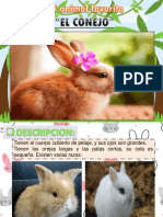 EXPOSICION DEL CONEJO- BRIANA.pptx