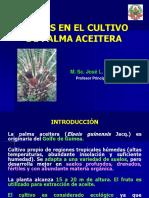 Plagas de Palma Aceitera I-2013
