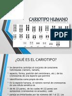 cariotipohumano-140603172425-phpapp01.pdf