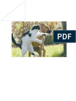 Pelea Gato y Perro