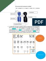Taller Estructura Del Cromosoma y Cariotipo