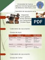 Calendario de Vacunas BOVINOS