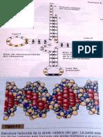 Materia Figura Acidos Nucleicos