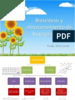 Biosíntesis y Almacenamiento de Triglicéridos