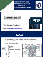 Morfofisiologia Cardiovascular