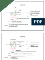 Los Procesos Fisiologicos y Cognitivos en El Habla, Produccion y Comprension
