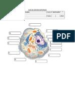 Guia de Ciencias Naturales Celula