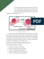 Desarrollo Neoplasia