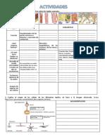 231051166-Actividades-Sobre-Tejidos-Animales-1.pdf
