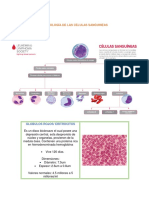 Morfología Celulas Sanguineas
